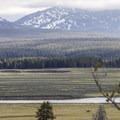 Elk grazing in Hayden Valley.- Hayden Valley