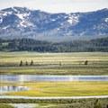 Yellowstone River.- Hayden Valley