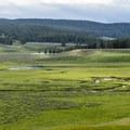 A lone bison in Hayden Valley.- Hayden Valley