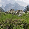 Flowers and Tetons are a great combination.- Lake Solitude via Cascade Canyon