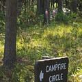 Fireweed (Chamaenerion angustifolium).- Lizard Creek Campground