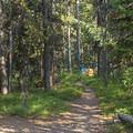 Heavily wooded areas around Lizard Creek Campground.- Lizard Creek Campground