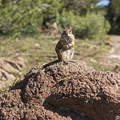This little guy was fearless!- Chessman Loop Trail