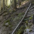 The beginning of the trail at the end of the Trail of the Cedars.- Avalanche Lake Hike