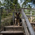 Leashed dogs are welcome at Natural Bridge State Park.- Natural Bridge State Park