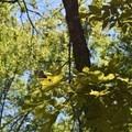 Butterflies in Pea Ridge National Military Park.- Pea Ridge National Military Park