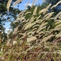 In the weeds at Pea Ridge National Military Park.- Pea Ridge National Military Park