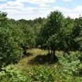 West Overlook.- Pea Ridge National Military Park