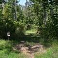 A trail in Pea Ridge National Military Park.- Pea Ridge National Military Park