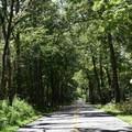 A paved auto tour at Pea Ridge National Military Park.- Pea Ridge National Military Park