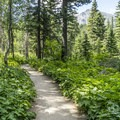 The nature trail is accessible.- Running Eagle Falls Hike