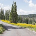 Wildflower carpets at Point Supreme Campground.- Point Supreme Campground