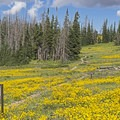There are a ton of wildflowers here.- Point Supreme Campground