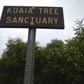 The trailhead.- Koai'a Tree Sanctuary