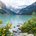 Turquoise waters and yellow flowers in summer.- Lake Louise Lakeshore Trail