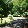 The tent area has three individual shelters.- Kalōpā State Park and Recreation Area Campground