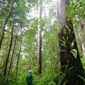 The trails are lush and green, but also very muddy.- Kalōpā State Park and Recreation Area