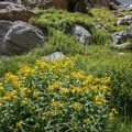 Wildflowers in the Gash area of the gorge.- Andrews Glacier Trail