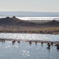 Lake Mývatn to the west.- Mývatn Nature Baths