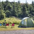 Coniferous trees along the eastern field edge.- Djúpivogur Campground