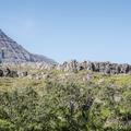 Explore the surrounding moss-covered hills.- Djúpivogur Campground