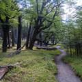 Dense forest add contrast to the open alpine views.- Mirador Maestri + Laguna Torre