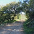 A shady section of the trail.- Santa Ynez Canyon Trail to Eagle Rock