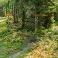 The trail intersection where the Long Trail leaves the ski trail.- Mount Ellen via the Long Trail