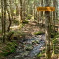 The intersection of the Jerusalem Trail with the Long Trail.- Mount Ellen via the Long Trail