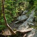 Typical trail terrain above 3,000 feet.- Mount Ellen via the Long Trail