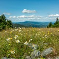 Ski runs are wonderful wildflower meadows in the summer.- Mount Ellen via the Long Trail