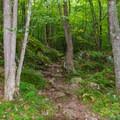 The Appalachian Trail heading toward Lambert Ridge.- Smarts Mountain