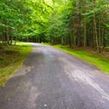 The campground road.- Wildwood Campground