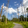 A trail through the forest.- Assateague Island National Seashore