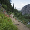Indian paintbrush.- Death Canyon to Patrol Cabin