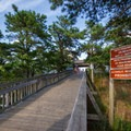 The walkway to the main beach.- Cape Henlopen State Park