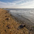 This beach is a popular area for horseshoe crabs.- Cape Henlopen State Park