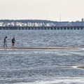 People looking for shells during low tide.- Cape Henlopen State Park