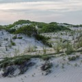Rolling dunes and seagrass.- Cape Henlopen State Park