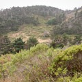 Muddy Hollow Trail in Point Reyes National Seashore.- Limantour Estero via Muddy Hollow