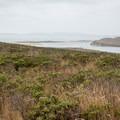 Estero Trail in Point Reyes National Seashore.- Limantour Estero via Muddy Hollow