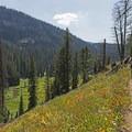Idyllic forest vistas in Granite Canyon.- Granite Canyon