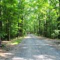 Boyds Hole Trail.- Caledon State Park