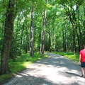 Strolling through old-growth forest.- Caledon State Park