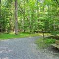 Bench alongside Boyds Hole Trail.- Caledon State Park