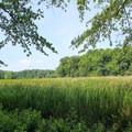 Caledon Marsh.- Caledon State Park