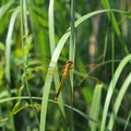 A dragonfly.- Caledon State Park