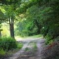 Caledon Marsh Trail.- Caledon State Park