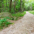 The white-blazed trail is a wide gravel road.- Pitcher Mountain Fire Tower