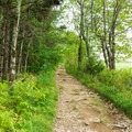 The white-blazed trail narrows a bit near a pasture.- Pitcher Mountain Fire Tower